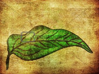 Grunge hand drawn green leaf