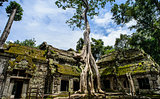 Ta Prohm Temple With Tree Growing Out of It, Siem Riep, Campodia