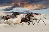 Five horse galloping