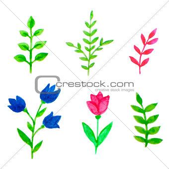 Watercolor floral elements for design