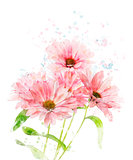 Watercolor Image Of Chrysanthemum