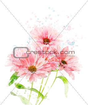 Watercolor Image Of Chrysanthemum