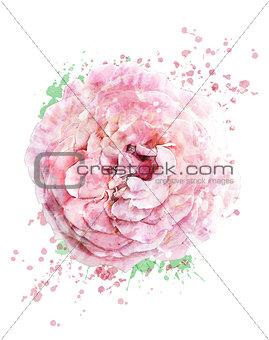 Watercolor Image Of Rose