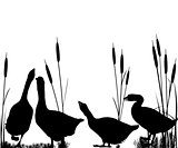 Goose and reeds silhouettes