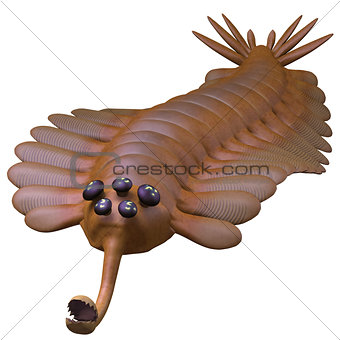 Cambrian Opabinia