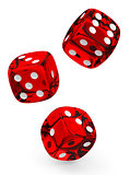 The dices