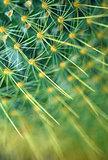 green cactus plant