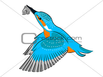 Kingfisher bird flying with a fish