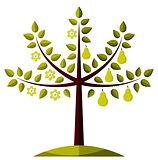 pear tree in two seasons