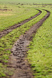 dirt road through the field