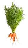 Bunch Of Fresh Carrots With Green Tops