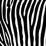 Black and white zebra striped background