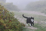 Cat in fog