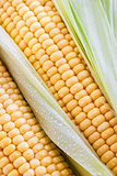 Fresh sweet yellow corn