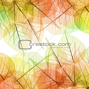 Background of Autumn Leaves - natural texture