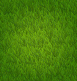 Green grass field, nature background