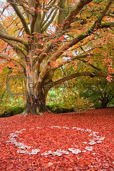 Beautiful Autumn Fall nature fairy ring mushrooms