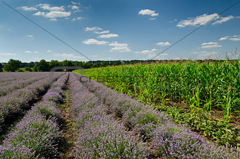 Beautiful scenery from the fields in northern Bulgaria