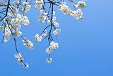 White Flower in a branch
