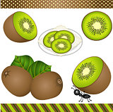 Kiwi Digital Clipart