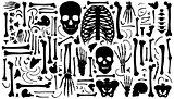 bone silhouettes