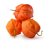 Three flowers of physalis