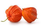 Two flowers of physalis