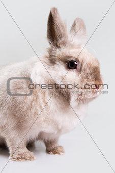 Adorable bunny