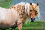 single horse on medow