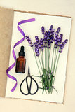Lavender Flower Herb