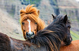 horse love, on the medow