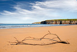 driftwood on the beach at Ballybunion