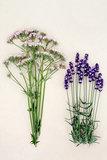Calming Herbs