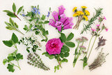 Naturopathic Herbs and Flowers
