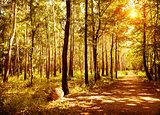 Walkway in autumn park