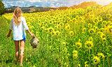 Walking in sunflowers field