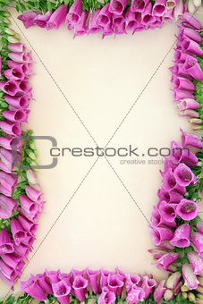 Foxglove Flower Border