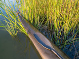 kayak bow in cattail