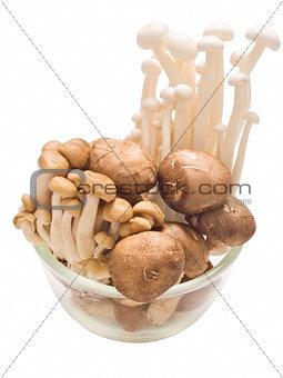 assorted mushroom isolated
