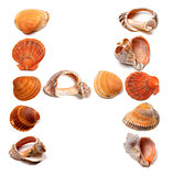 Letter H composed of seashells