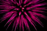 Abstract purple firework burst using focus pull