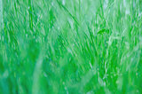 green fresh grass background.