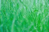 green fresh grass background.