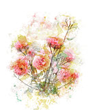 Watercolor Image Of Roses
