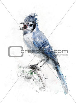 Watercolor Image Of Blue Jay