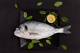 Sea bream on plate with herbs.