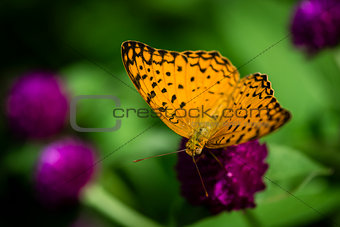 Beautiful orange butterfly in the garden