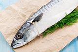 Fresh mackerel stuffed with dill