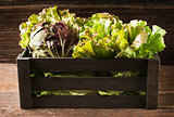 Salad in box