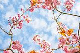 Pink Flower in a branch